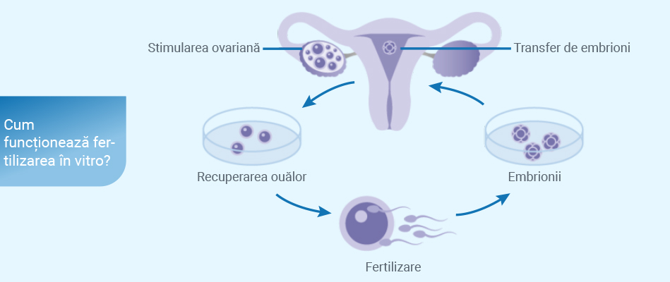 pierderea în greutate după transferul de embrioni